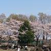見沼氷川公園(みぬまひかわこうえん) さいたま市お花見穴場おすすめスポット