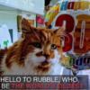 【速報】世界最年長ネコ、30歳の誕生日を迎える / World's Oldest Cat Celebrates 30th Birthday