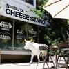 春とチーズ。チーズスタンドとうつぼかずら