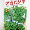 【発芽せず】水耕栽培で「オカヒジキ」に挑戦。シャキシャキとした食感が美味しい野菜です