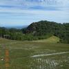 夏至直前 黒岩・向坂山のオオヤマレンゲ
