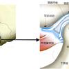 顎関節症ー口腔顔面痛シリーズ