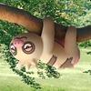 【ポケモンGO】6月のコミュニティ・デイはナマケロ!!色違いナマケロってどんな色!?