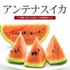 「冬でも食べれる甘〜いスイカ」◇ 日記