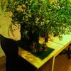 オフィスのグリーン化最新事情