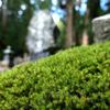 奥の院は苔むす墓所。 :高野山その13