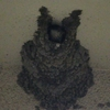 コシアカツバメの雛が巣の外を窺っていた!