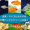 金魚・タナゴにおすすめ水槽バックスクリーン10選!選び方も教えます