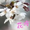 【韓国語】「花冷え」は韓国にも!ー韓国と日本の似ている季節感