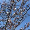1週間の振り返り(2017/4/1〜2017/4/7)