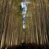 嵐山ライトアップ花灯路のベストコースは・・