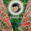 【少女漫画】水樹和佳子『樹魔・伝説』イティハーサはやっぱりSFだった