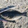 楽しい釣り♪ 2020秋第十回目の紀州釣り
