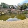 くつろぎの広場の池(東京都多摩)
