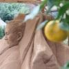 慎太郎砂像アート。展示中。