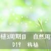 【移植3周期目 自然周期】 D19 移植