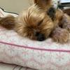 愛犬9歳の誕生日