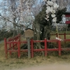 弘前市隠れた桜の名所有り
