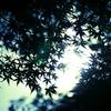 楓の下で | LUMIX 14-140mm
