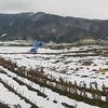 畑'2014大雪融雪後