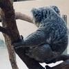 【完結】動物園ぼっち散策(6)
