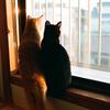 猫がしっぽをピンと上げてお尻を見せてくる意味