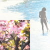 歌うように春散歩―西城秀樹さんの魔法かな