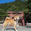 秋の滋賀 犬連れお出掛け ~白髭神社・メタセコイア並木・びわこ箱館山~