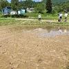 魚沼から自分が田植えした米が届きました。