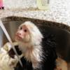 貸し切りのお風呂で湯あみして至極ご満悦の小猿