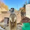 変わった動物いっぱい距離感近し!伊豆シャボテン動物公園は普通の動物園に飽きた人向き