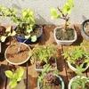 7月の盆栽は青々と