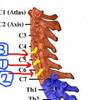 頚椎(4) 頸椎症を探求するわ!その1