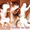 世界猫の日~World Cat Day~2020