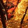 2019年の最上山公園紅葉を撮影してみた(無料駐車場メモあり)