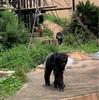 【茨城・週末プチ旅行にも】かみね動物園がめちゃくちゃ良かった