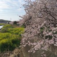 春ですね。植物に癒されています。そして統合ワークの日々