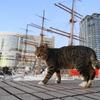 11月前半の #ねこ #cat #猫 その4