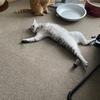 猫ちゃんの平和な日常