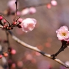 春は強力なスピリチュアルを感じやすい季節【立春】