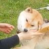 保護犬たちとKaoriさん