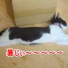 今日の黒猫モモ&白黒猫ナナの動画ー520