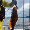 新米漁師 根魚を釣る