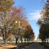 秋の3連休のなかび〜昨日に続いてランニングしました〜