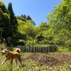 【田舎暮らし】畑作業や草刈りをする時に聞きたい癒しとテンションをあげるおすすめの10曲!