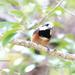 春の公園で出会った鳥さん