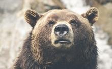 野生のクマへの対処法をVRトレーニングで身に付ける。英語多読ニュース