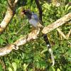 生き物探検記 - 台湾で野鳥観察の旅!① 〜街中なのにたくさんの野鳥と出会えた編〜