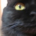 三日坊主の猫日記