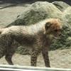 3つ子のチーターの赤ちゃんを見に!in多摩動物公園~GWお出かけ、なな散歩~